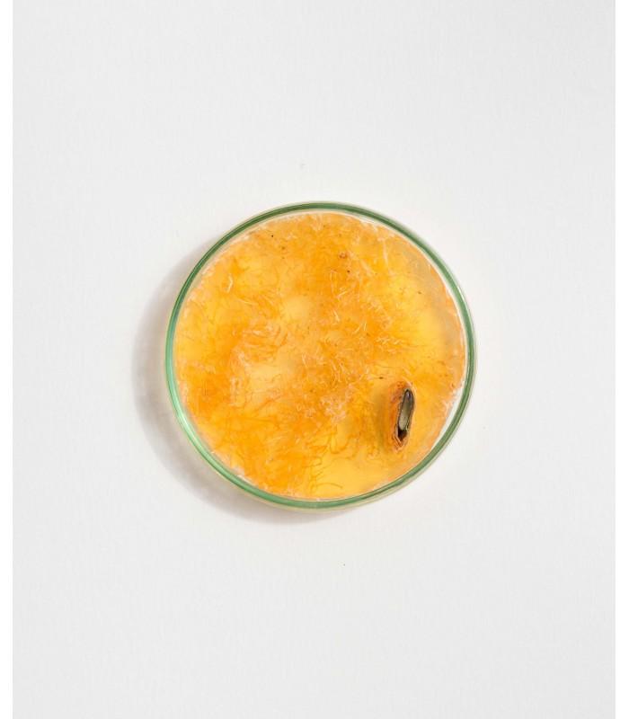 secret-silhouette-sublime-body-soap-loofah-perfume-orange-texture-pinup-secret